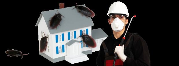 pest company