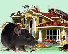 rat and house