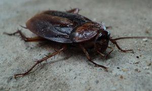 a-cockroach